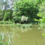 Froschweiher am Karlsfelder See