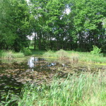 Biotop am Karlsfelder See