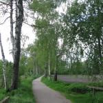 Naturdenkmal Birkenallee